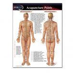 Permachart Acupuncture Points