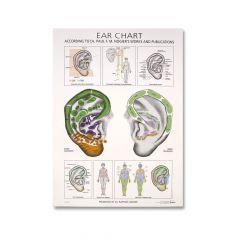 Paul Nogier Ear Desk Chart