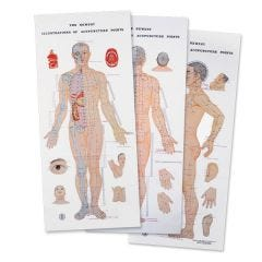 Newest Illustrated Acupuncture Points Chart