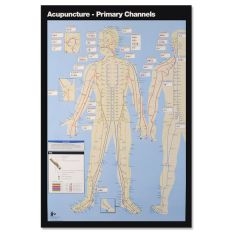 Primary Channels Acupuncture Wall Chart