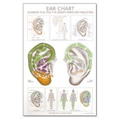 Ear Wall Chart According to the Work of Paul Nogier