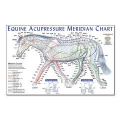 Equine Meridian Chart