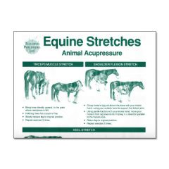 Equine Stretch Poster