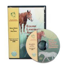 Equine Landmark Anatomy & Acupoint Energetics