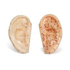 Ear Model (small)